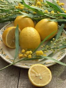 Plate of Lemons and Mimosa Flowers by Michelle Garrett