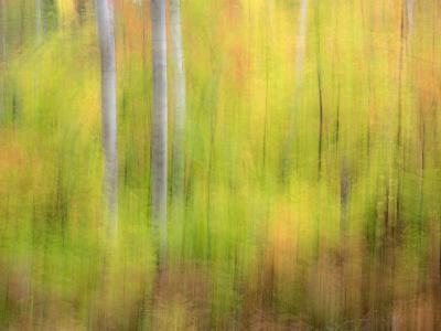 Michigan, Upper Peninsula. a Panned Motion Blur of Autumn Woodland-Julie Eggers-Photographic Print