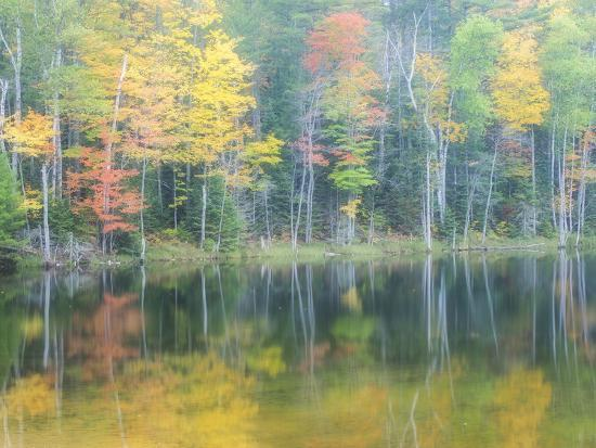 Michigan, Upper Peninsula. Fall Colors on Thornton Lake, Alger Co-Julie Eggers-Photographic Print