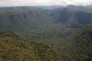 Aerial View of Mountainous Rainforest in Guyana, South America by Mick Baines & Maren Reichelt