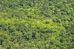 Aerial View of Pristine Rainforest Canopy, Guyana, South America by Mick Baines & Maren Reichelt
