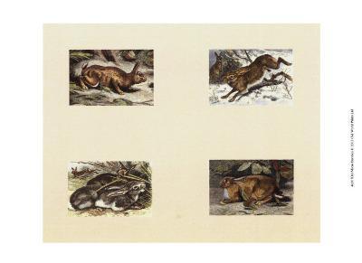 Micro Bunnies--Art Print