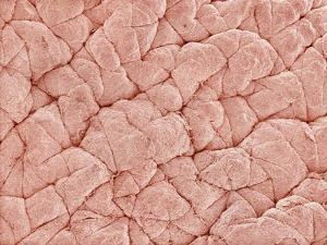 Human Skin by Micro Discovery