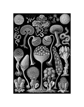 https://imgc.artprintimages.com/img/print/microscopic-mycetozoa_u-l-f5qc8p0.jpg?p=0