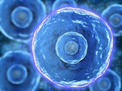 Microscopic View of Human B-Cells--Art Print