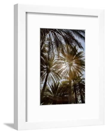 Midday sun in Palm Trees. Oman.-Tom Norring-Framed Photographic Print