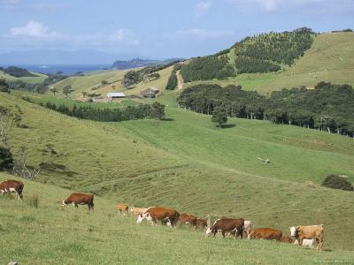 Middle Island Farm, Waiheke Island, Hauraki Gulf, North Island, New Zealand-Ken Gillham-Photographic Print