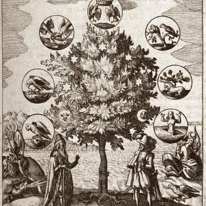 Alchemical Tree, Philosophia Reformata by Middle Temple Library