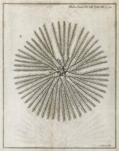 Echinoderm, 18th Century by Middle Temple Library