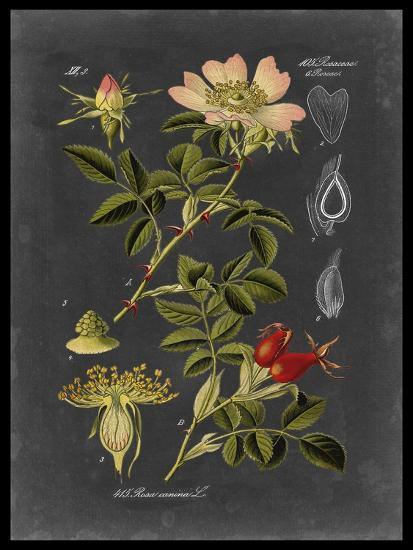 Midnight Botanical I-Vision Studio-Premium Giclee Print