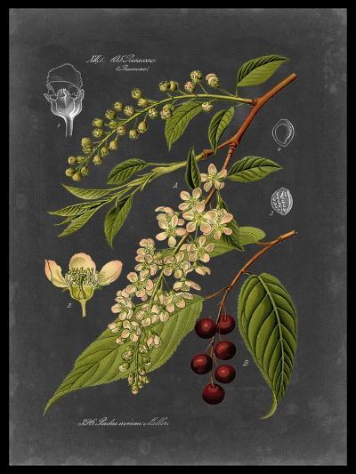 Midnight Botanical II-Vision Studio-Art Print