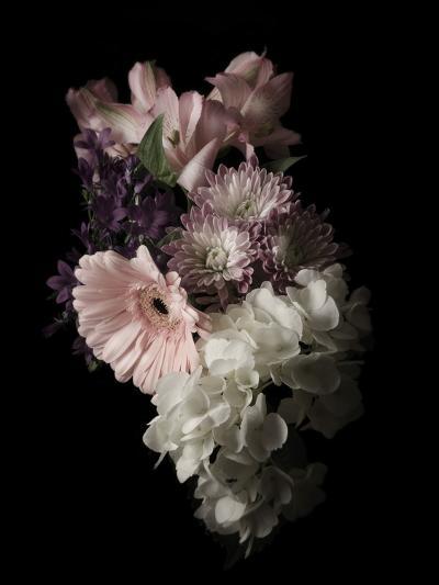 Midnight Gerbera-Julie Greenwood-Art Print
