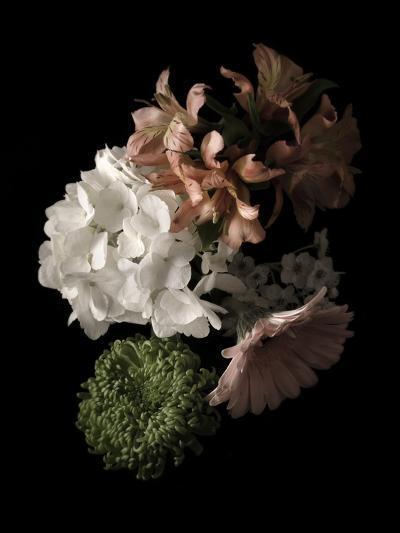 Midnight Hydrangea-Julie Greenwood-Art Print