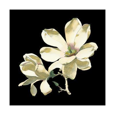 https://imgc.artprintimages.com/img/print/midnight-magnolias-i_u-l-pxn9hc0.jpg?p=0