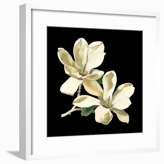 Midnight Magnolias II-Chabal Dussurgey-Framed Art Print