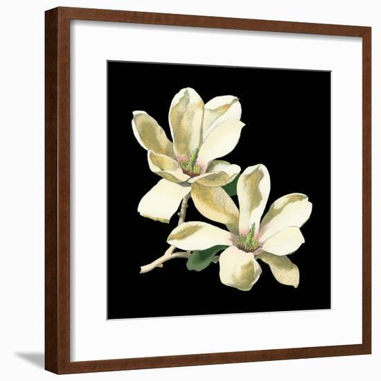 Midnight Magnolias II-Chabal Dussurgey-Framed Art Print