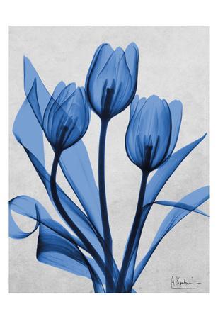 https://imgc.artprintimages.com/img/print/midnight-tulips-2_u-l-f8ixac0.jpg?p=0