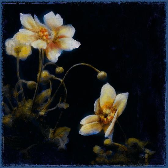 Midsummer Night Bloom III-Douglas-Giclee Print
