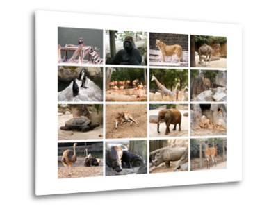 Wild Animals Collage