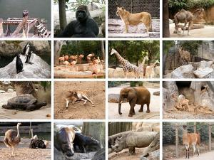 Wild Animals Collage by miff32