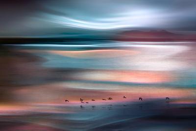 https://imgc.artprintimages.com/img/print/migrations-blue-sky_u-l-q1bk9yh0.jpg?p=0