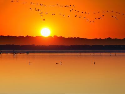 Migratory Birds-Marco Carmassi-Photographic Print
