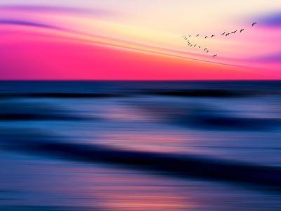 Migratory-Josh Adamski-Photographic Print