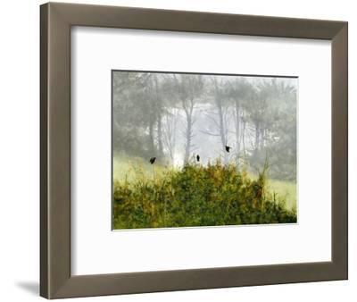 Redwings in the Mist