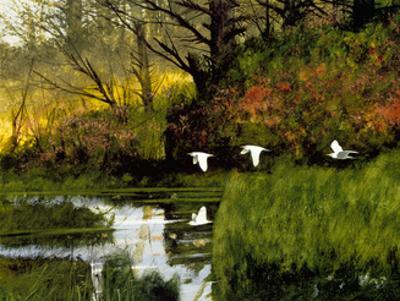 Three Egrets by Miguel Dominguez