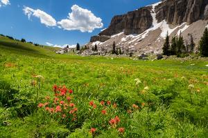 Indian Paintbrush Growing With Cow Parsnip In Large Meadow Along Devil's Stairs Trail In Teton Mts by Mike Cavaroc