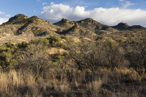 Large Grassland Hills That Make Up The Canelo Hills, Coronado National Forest, Arizona by Mike Cavaroc
