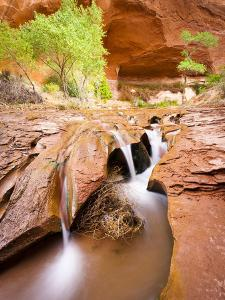 Waterfall in Coyote Gulch by Mike Cavaroc