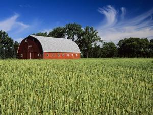A Field of Wheat and Barn, Myrtle, Manitoba, Canada by Mike Grandmaison