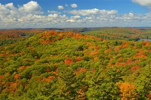 Aerial of Mixed Woods in Autumn by Mike Grandmaison
