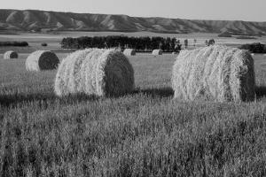 Canada, Manitoba, Rolled Hay Bales in Field by Mike Grandmaison
