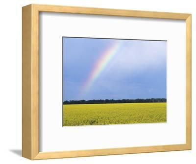 Rainbow and Canola, Morris, Manitoba, Canada