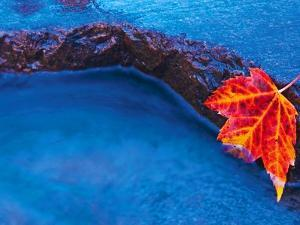 Red Maple Leaf on Edge of Rock in Chikinishing River, Killarney Provincial Park, Ontario, Canada by Mike Grandmaison