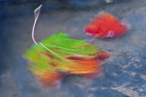 Swirling Maple Leaves I by Mike Grandmaison