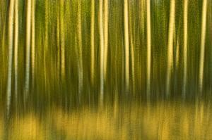 Tree Abstraction II by Mike Grandmaison