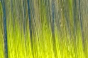 Tree Abstraction VI by Mike Grandmaison