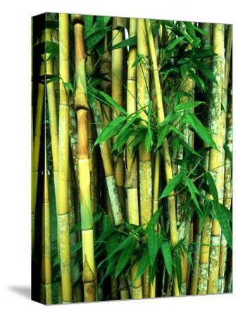 Bamboo, Sumatra