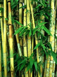Bamboo, Sumatra by Mike Hill