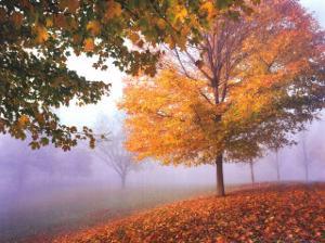 Autumn Mist by Mike Jones