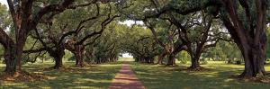 Enchanted Oaks by Mike Jones