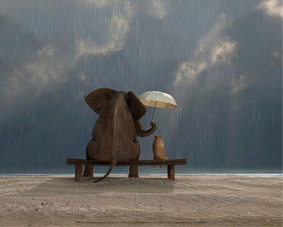 Elephant and Dog Sit Under the Rain by Mike Kiev