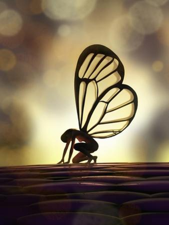 Fairy Butterfly by Mike_Kiev
