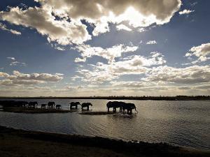 Elephant Herd, Botswana by Mike Powles