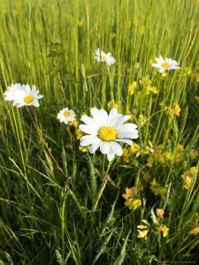 Wildflower Meadow, UK by Mike Powles