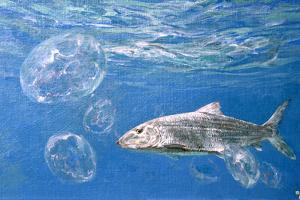 A Single Bonefish Glides Among Jellyfish in the Blue Water Tropics of the Bahamas by Mike Rivken