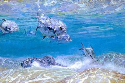 Jack Fish, Ray Fish and Permit Fish Mingle Above a Sandy Flat